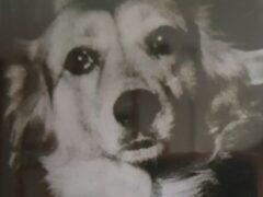 Спасатели вызволили угодившую в коллектор собаку