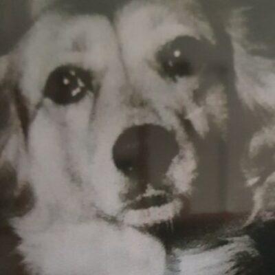 __собак пес