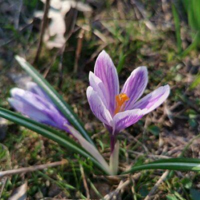 __весна, цветок