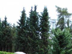 Медведь сорвал поиски пропавшего пенсионера под Новосибирском