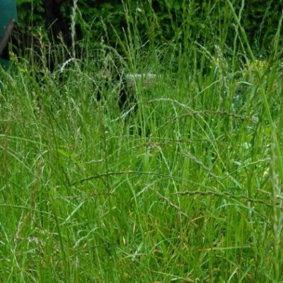__ трава, зелень, поле