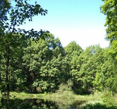 __ лес, природа, лето